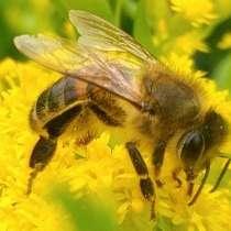 20 пчелосемей, в Барнауле