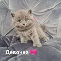 Продажа котенок, в г.Кишинёв