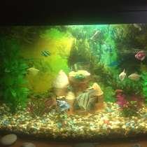 Аквариум с рыбками, в г.Чиста