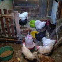 Яйца куриные, в Санкт-Петербурге
