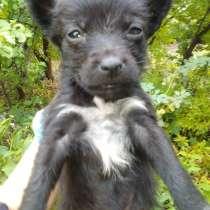 Спасти щенков, в Воронеже