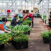 Работа и вакансии женщинам в Голландии, в г.Львов