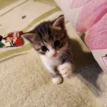 Отдам котенка, в Екатеринбурге