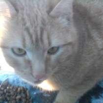 Рыжий котенок-подросток, в Голицыне