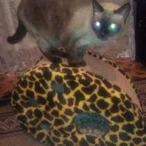 Продам кошкин дом новый, в г.Павлодар
