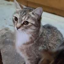 Замечательная нежная Мирабелла. Кошечка-сиротка в добрые рук, в Москве