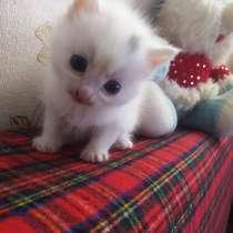 Продам котят, в Приморско-Ахтарске