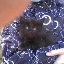 Отдам котят в добрые руки !!!, в Жигулевске