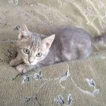Очаровательного котёночка (девочку) отдадим в добрые руки, в Ростове-на-Дону
