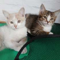Срочно раздаются красивые котята, в Улан-Удэ