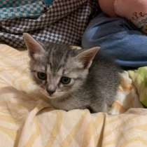 Котёнок, в Йошкар-Оле