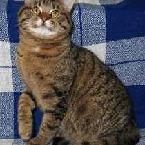 Шикарный кот ищет семью, в Москве
