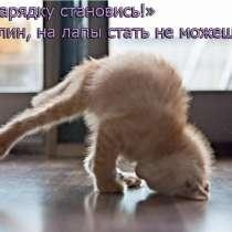 Отдам КОТА бесплатно (умный, красивый), ходит на унитаз, в Иркутске