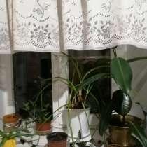 Растения, в Астрахани