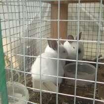 Кролики, в Урюпинске