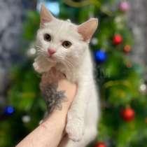 Отдам котёнок, в Южно-Сахалинске