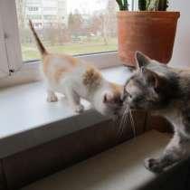 Отдадим бело-рыжего котенка 1,5 месяца. К туалету приучен, в Зеленогорске