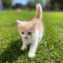 Рыжие котята, в Домодедове