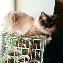 Стерилизованной кошке Мусечке ищем дом, в Кургане