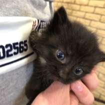 Ищут до 4 красивых котенка, в Челябинске