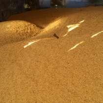 Пшеница (крупа), в Старом Осколе