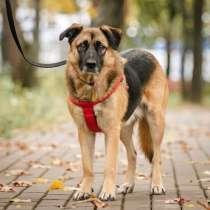 Очень добрая и воспитанная собачка Тэрри ищет дом, в Москве