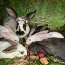 Крольчата, в Комсомольске-на-Амуре