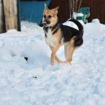Преданная и любящая собака Гера (овчаристая девочка) ищет l, в г.Таллин