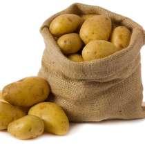 Картофель, в Тамбове