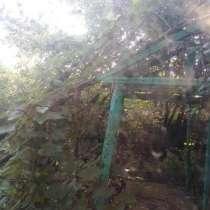 Отдам деревья фруктовые, спил на дрова, транспортн, в Новороссийске