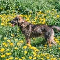 Джек - собака- мечта в добрые руки, умный пес ищет дом, в Москве