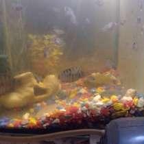 Аквариумные рыбки, в Можайске