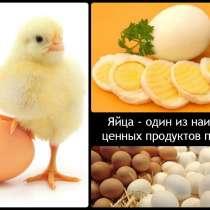 Яйцо куриное с личного хозяйства с доставкой, в Нижнем Новгороде