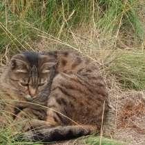 Активная, задорная кошка, в Кемерове