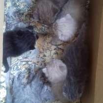 Котятки, в Челябинске