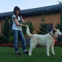 Central Asian Shepherd, Best Puppy Breed, в г.As Satwah
