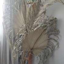 Листья пальмы сухие, в Москве