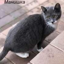 Сёма и Манишка 7 мес котята-подростки ищут хозяев!, в Москве