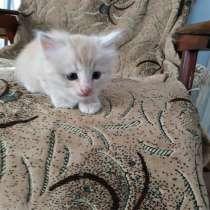 Котята в добрые руки, в г.Херсон