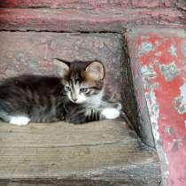 Отдам пушистых красивых котят, в Новочеркасске