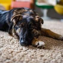 Привет! Классный щенок ищет свой дом, в Москве