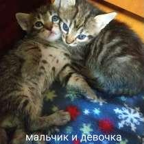 Отдам котят в добрые руки!, в г.Бельцы