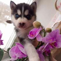 Продаю щенка, девочка, род.23.12.2020 г, в Калуге