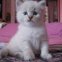 Осталось всего два котёнка!!!, в г.Усть-Каменогорск