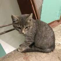 Брошенные котята, в Комсомольске-на-Амуре