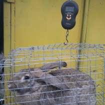 Продам молодых кроликов, в г.Комрат