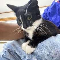 Маленькое солнышко, милейший котенок Сима в добрые руки, в Санкт-Петербурге