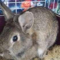 Отдам кролика, в Богородске