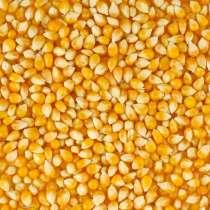 Кукурузы зерно, в Краснодаре