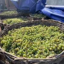 Продам виноград, в г.Сорока